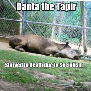 Danta Tapir
